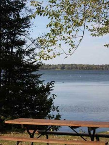 Cabin 8 View